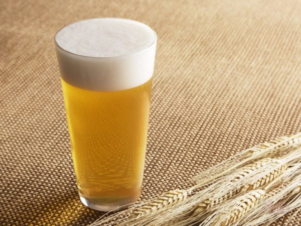 Foyda yoki pivo zarar