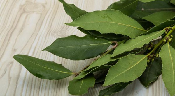 Bay leaf from alcoholism recipes