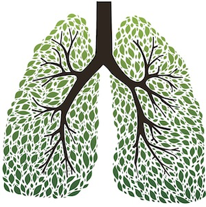 Clearing the lungs, you will feel the breath of life