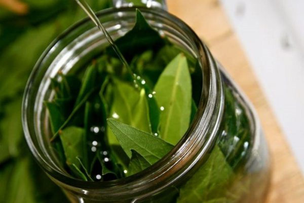tincture of Bay leaves from alcoholism