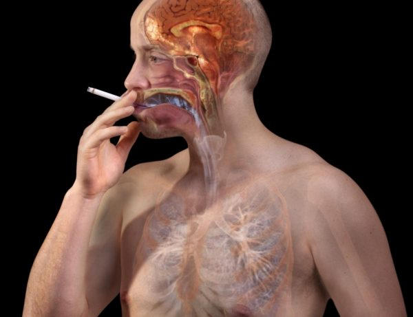 The influence of nicotine on the nervous system